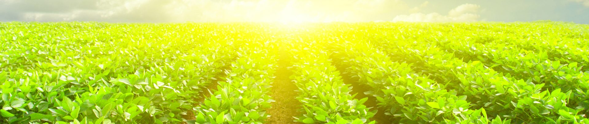 Trading, Sourcing & Marketing of Agricultural Commodities